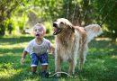 Κατοικίδιο : Ποια τα οφέλη της συνύπαρξης ενός παιδιού με ένα συμπαθές ζωάκι; Πώς επιδρά το κατοικίδιο στην ψυχοσυναισθηματική ανάπτυξη του παιδιού;